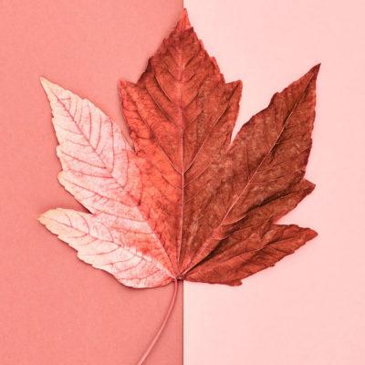 Poppelier Schilders - kleur is mooi
